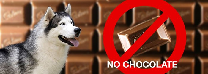 No chocolate for huskies