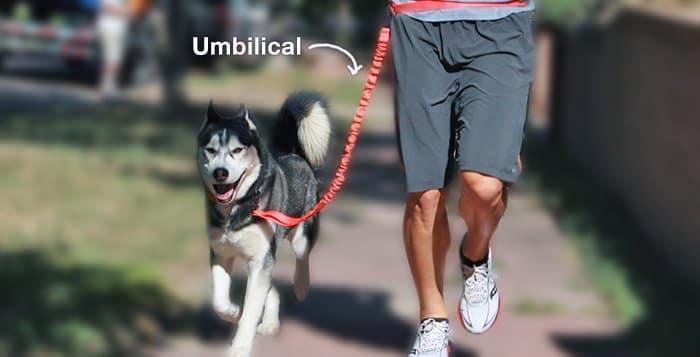 Umbilical Training Husky