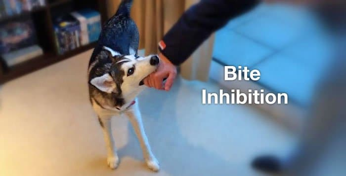 Teaching Bite Inhibition