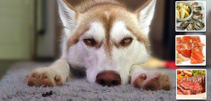 Correcting Zinc Deficiency in Huskies