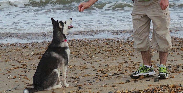 Dog Training Method