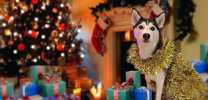 Husky Christmas Presents