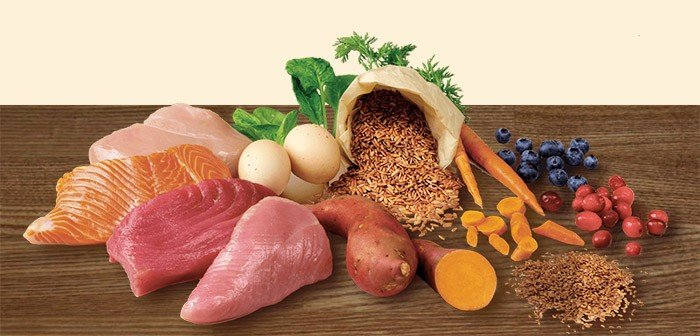 Introduction to Raw Feeding