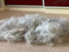 Husky Fur Brushed
