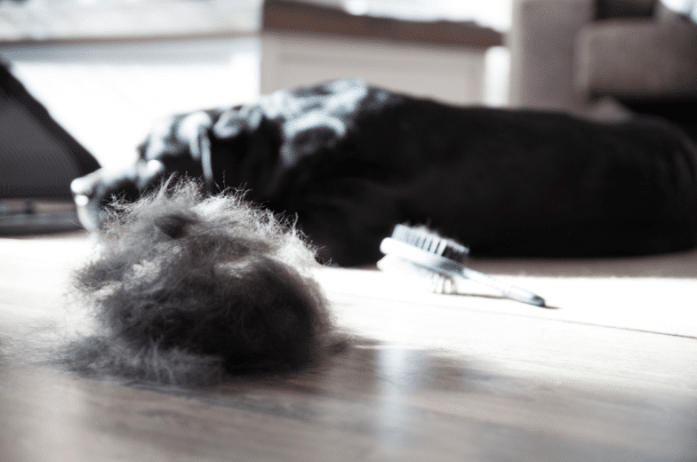 Spring Shedding in Snow Dogs - Grooming